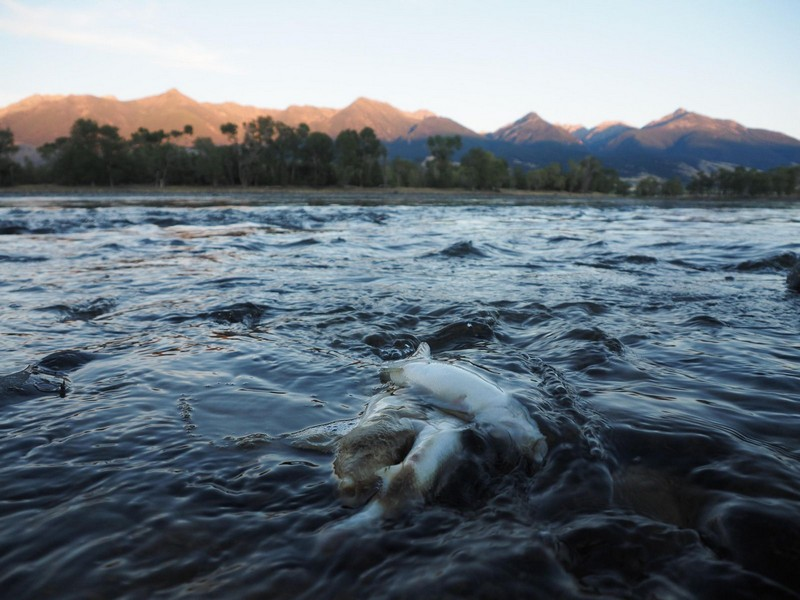 Wanderlust Tips Magazine | Yellowstone River's stretch closed due to fish death