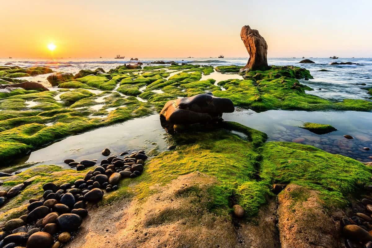 Wanderlust Tips Magazine | 8 must-see places in Binh Thuan in the morning