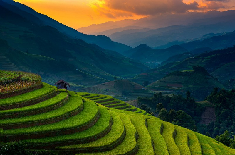 Wanderlust Tips Magazine   Golden waves on the terraces in Mu Cang Chai