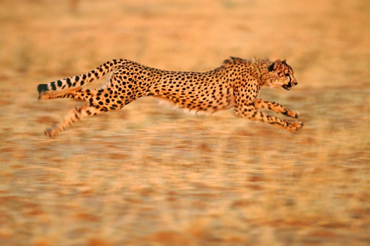 Wanderlust Tips Magazine   Wildlife photography experiences