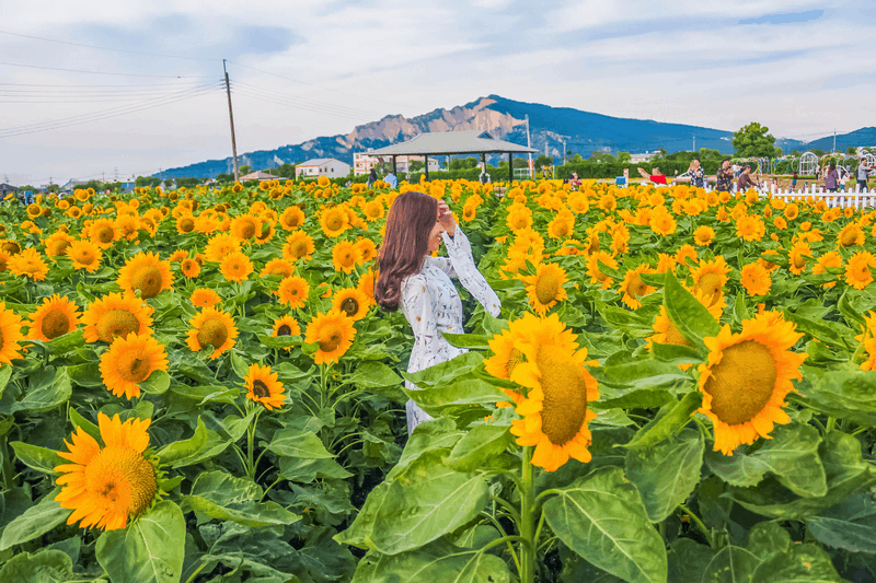 Wanderlust Tips Magazine   Travel blogger Alexis Toh: I love and want to return to Vietnam