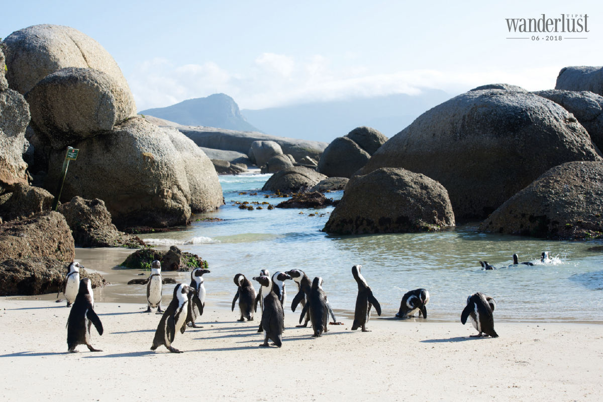 Wanderlust Tips Magazine   Cape Town – The rendezvous of the oceans