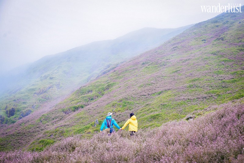Wanderlust Tips | Escape to Ta Chi Nhu to marvel at the beautiful flower hill of Chi Pau