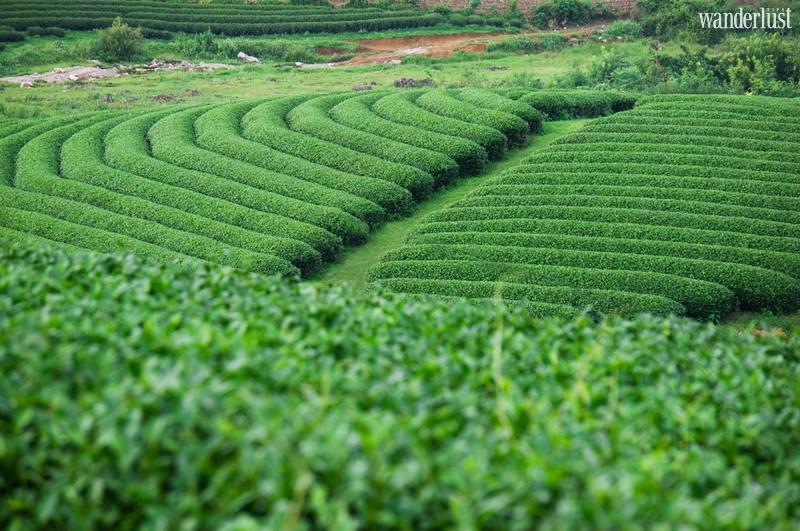 Wanderlust Tips Travel Magazine | Best destinations in Lai Chau, Vietnam