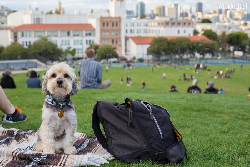 Wanderlust Tips Travel Magazine | Fun facts you may not know about San Francisco, California