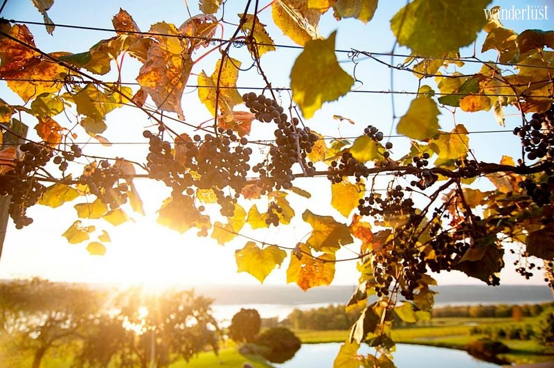 Wanderlust Tips Travel Magazine | The best destinations in America for wine lovers