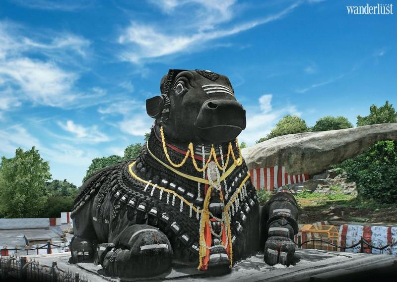 Wanderlust Tips Travel Magazine | The most impressive animal places around the world