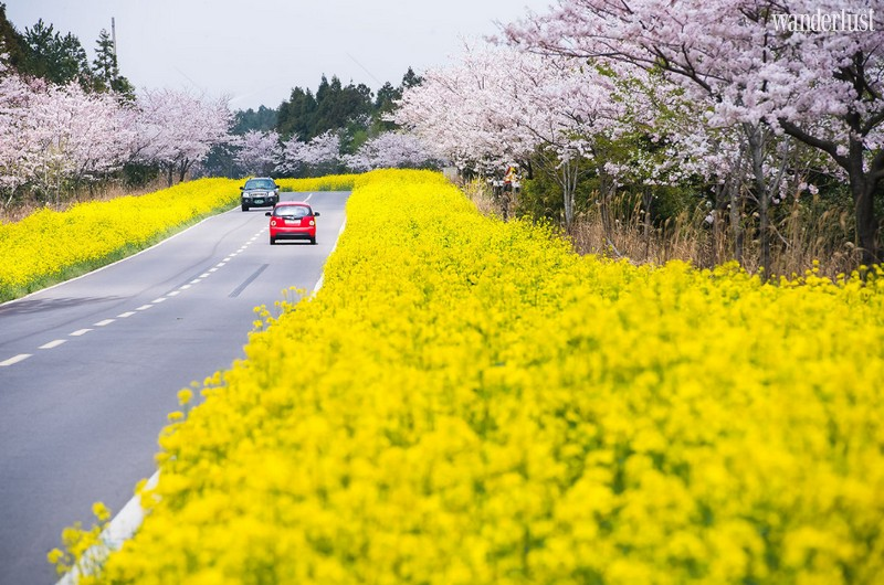Wanderlust Tips Magazine   Where to see the most stunning spring flowers around the world