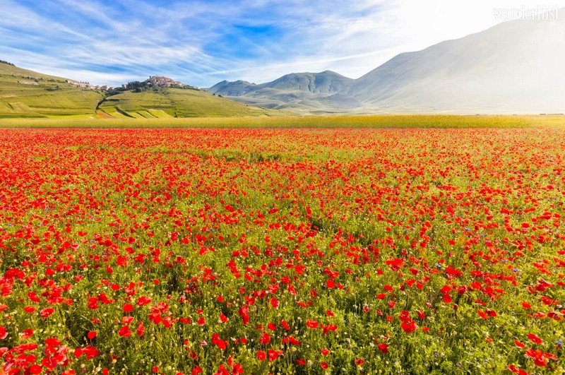 Wanderlust Tips Magazine   Where to see the most stunning flowers around the world