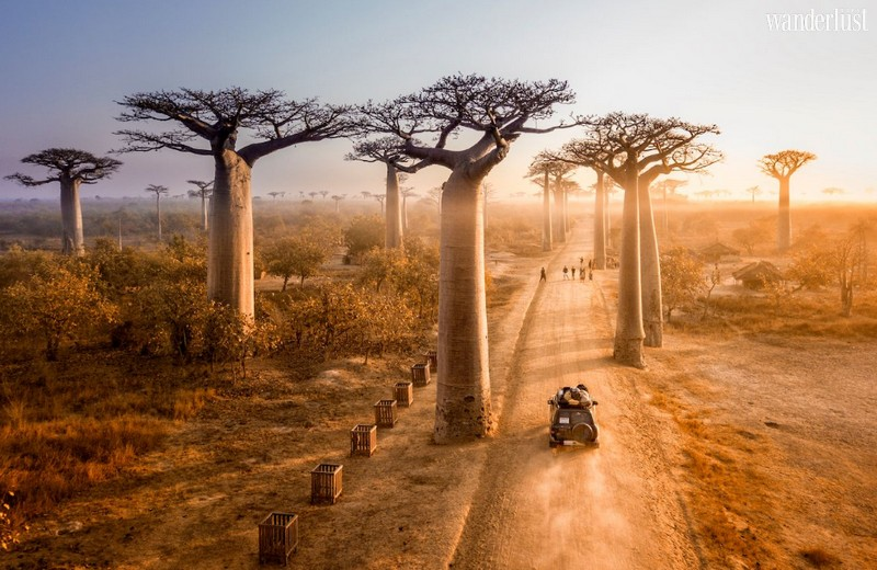 Wanderlust Tips Magazine | Visit the most unique tree spectacles around the world