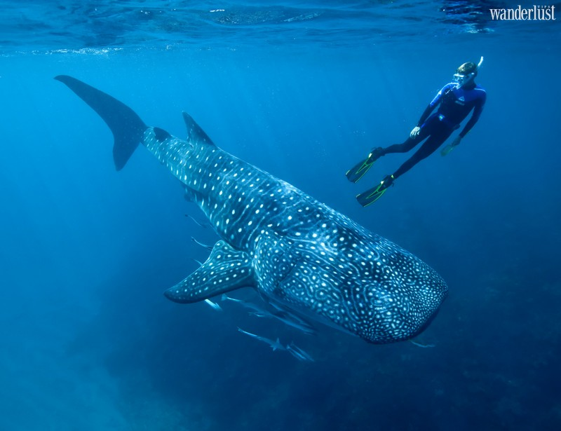 Wanderlust Tips Magazine   7 incredible adventures around the world