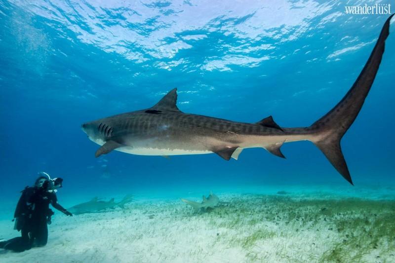 Wanderlust Tips Magazine   7 incredible shark adventures around the world