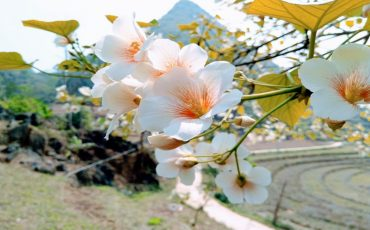 Wanderlust Tips Magazine | An exquisite floral interlude across Vietnam