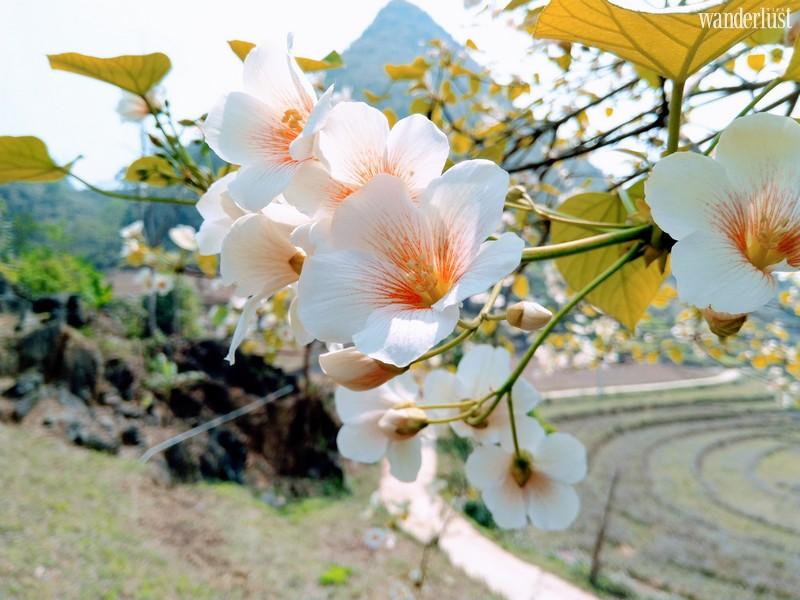 Wanderlust Tips Magazine   An exquisite floral interlude across Vietnam