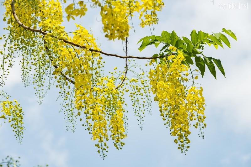Wanderlust Tips Magazine   April: An exquisite floral interlude across Vietnam