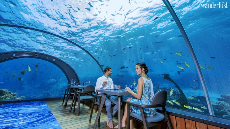 Wanderlust Tips Magazine | The 7 most amazing wildlife experiences in the Maldives