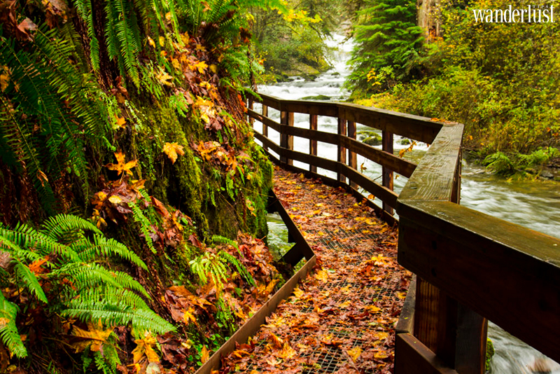 Wanderlust Tips Magazine   Oregon this fall: Top 5 Coolest outdoor adventures to enjoy