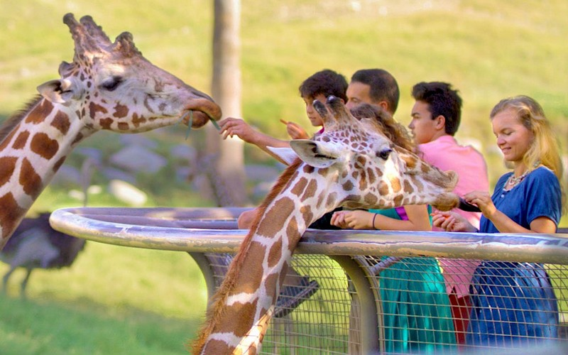 Wanderlust Tips | Day in the wildlife: A family trip to Palm Desert Living Desert Zoo and Gardens